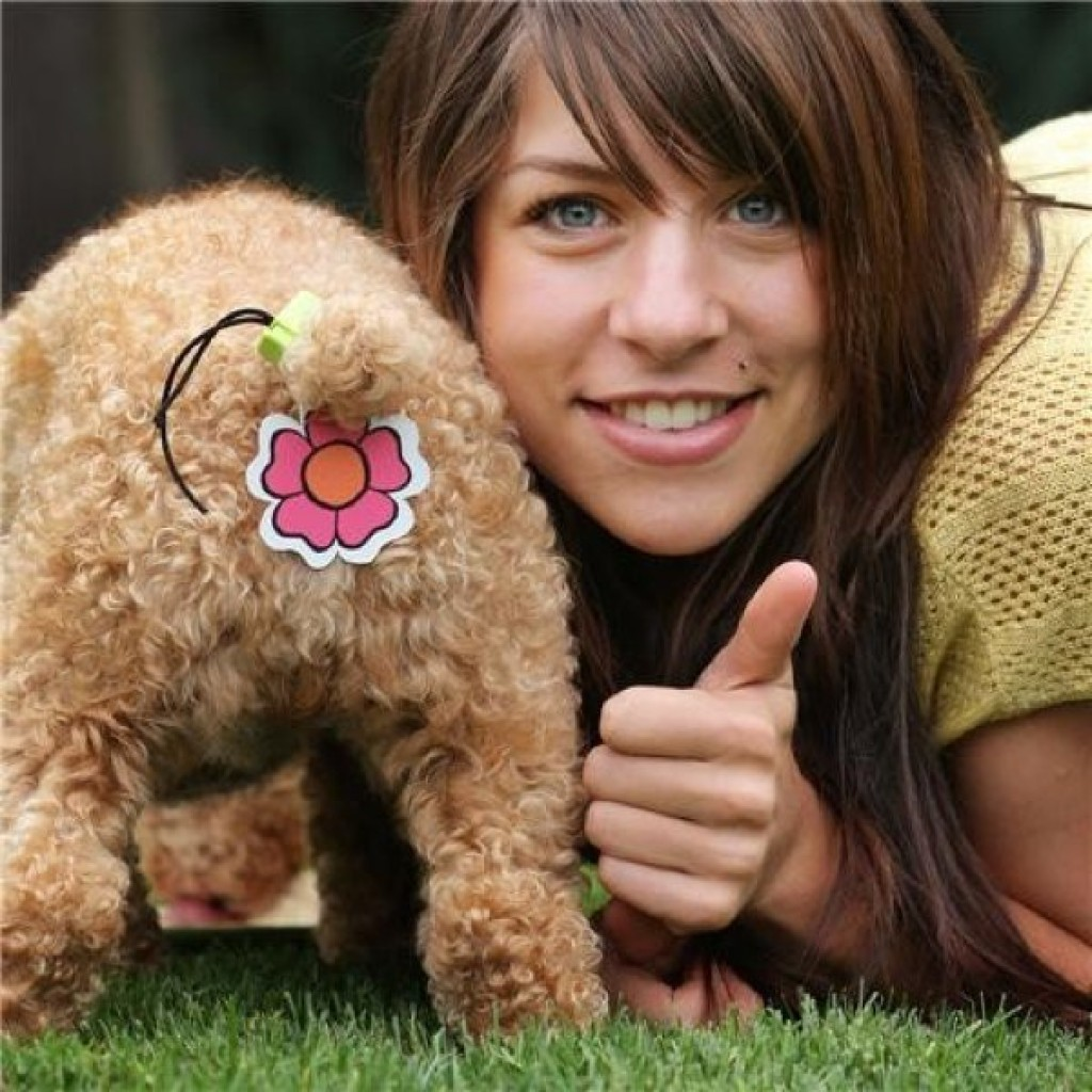 Most humiliating dog accessories
