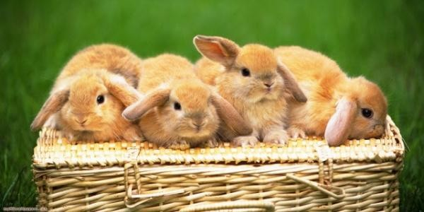 Most famous bunnies of all times