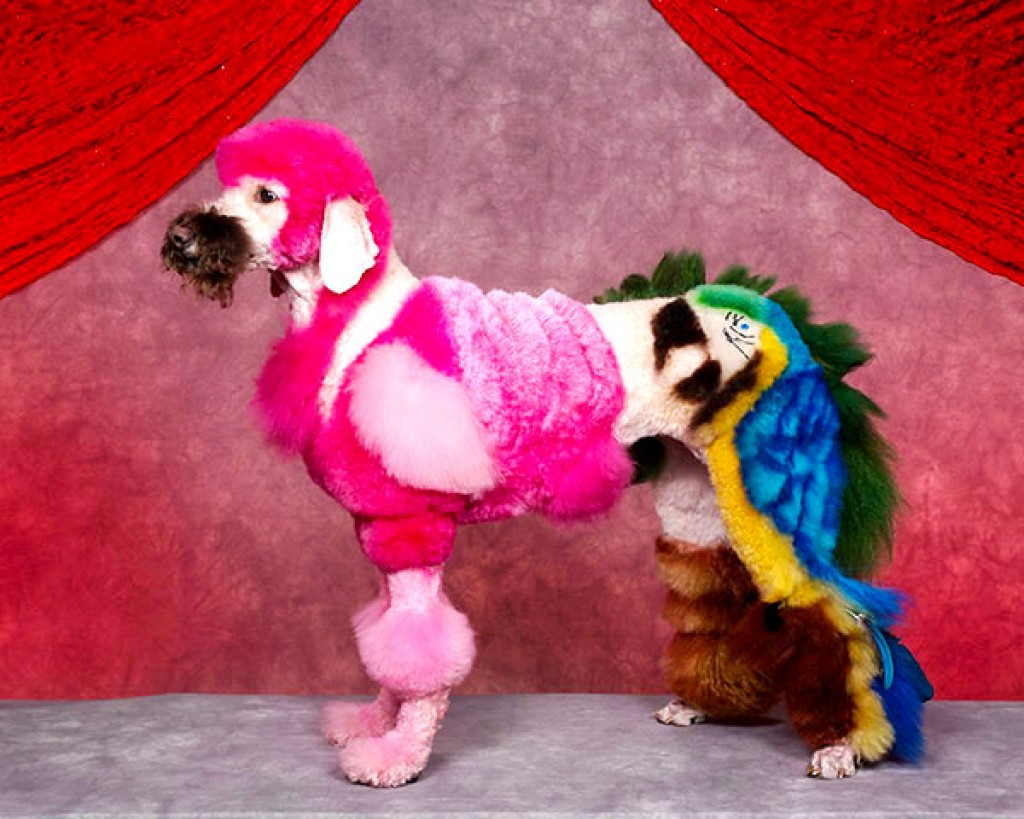 Funniest dogs in dog shows!