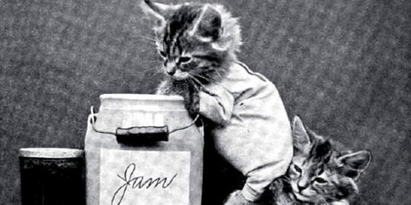 Hilarious first cat memes in history