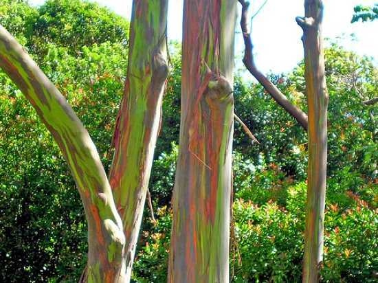 Bizarre types of trees