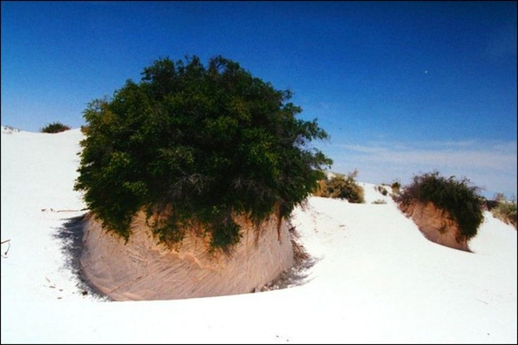Amazing white sand gallery