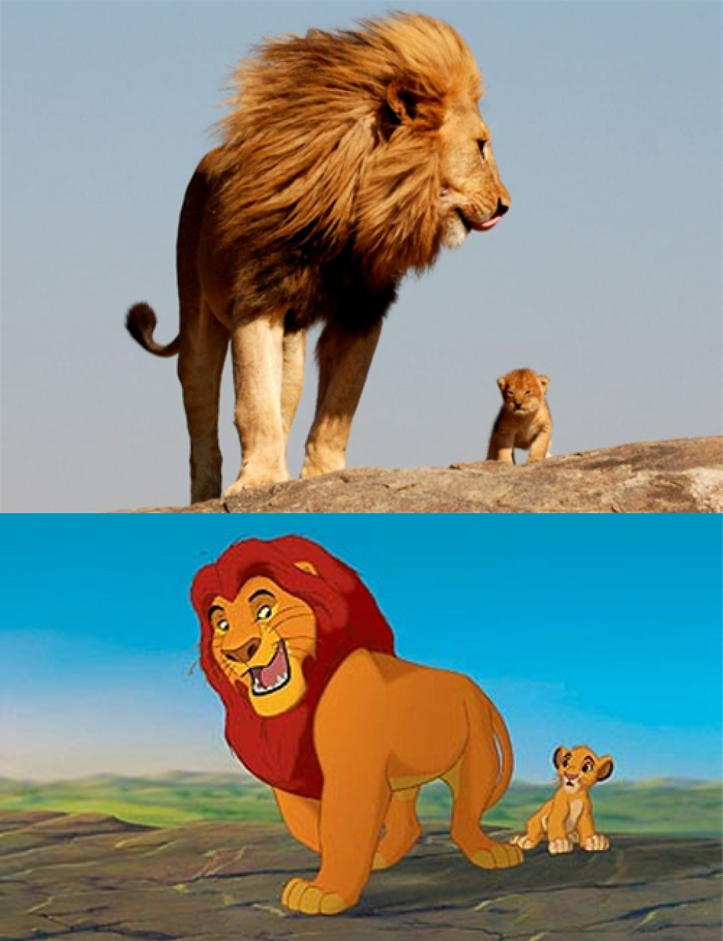 Real Life Lion King